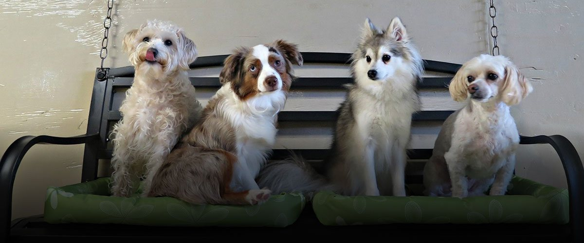 Fort Fido Dog Daycare and Overnight Boarding is open every day including holidays.